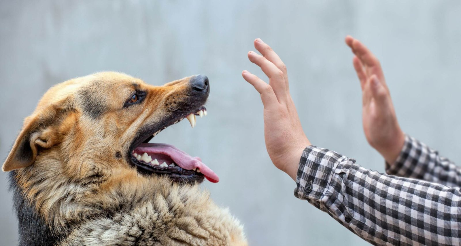 Umbrella-Insurance-For-Dog-Bites-Wisconsin